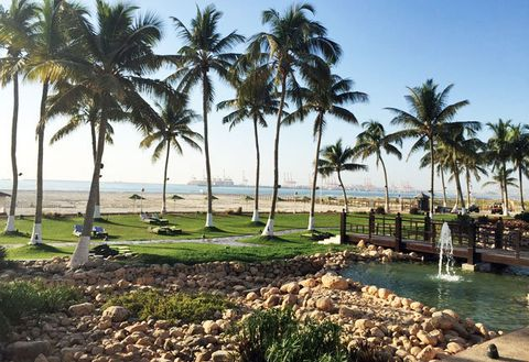 Tree, Palm tree, Arecales, Attalea speciosa, Plant, Resort, Woody plant, Vacation, Elaeis, Sky,