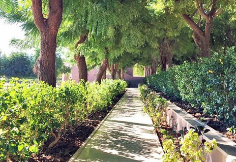 Green, Vegetation, Tree, Garden, Natural landscape, Botanical garden, Walkway, Leaf, Botany, Plant,