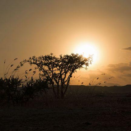 Sky, Horizon, Atmospheric phenomenon, Tree, Sunrise, Sun, Sunset, Morning, Natural landscape, Cloud,