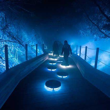 Blue, Light, Water, Sky, Lighting, Night, Tree, Darkness, Atmosphere, Architecture,