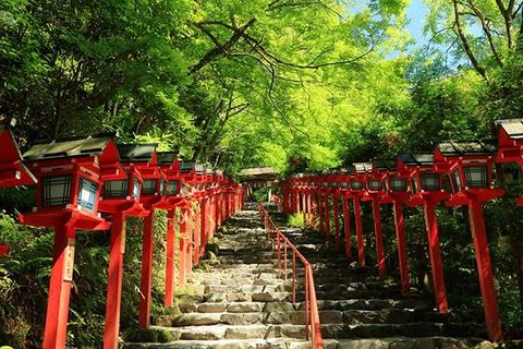 Red, Shinto shrine, Place of worship, Temple, Shrine, Torii, Botany, Tree, Spring, Plant,