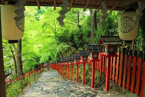 Botany, Torii, Place of worship, Shinto shrine, Tree, Plant, Temple, Architecture, Building, Shrine,