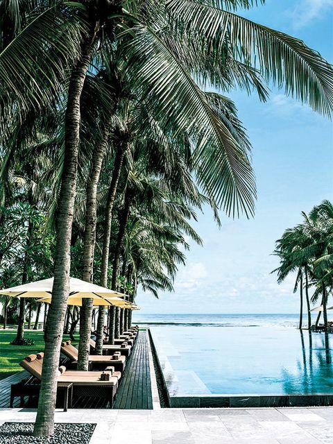 Tree, Tropics, Palm tree, Arecales, Vacation, Sky, Woody plant, Resort, Plant, Caribbean,