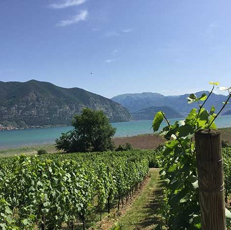 Vineyard, Hill station, Sky, Natural landscape, Agriculture, Wilderness, Mountain, Lake, Hill, Field,