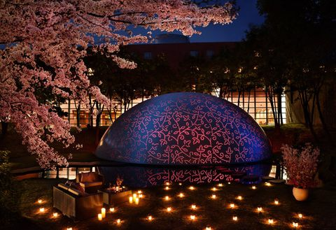 Lighting, Night, Dome, Cherry blossom, Flower, Botany, Plant, Blossom, Dome, Sphere,