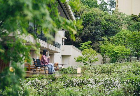 Green, Vegetation, Grass, House, Botany, Tree, Summer, Grass family, Rural area, Spring,