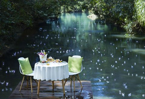 Nature, Green, Table, Water, Botany, Furniture, Pond, Chair, Plant, Flower,