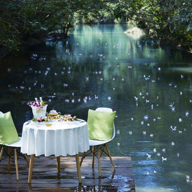 Nature, Green, Table, Water, Botany, Pond, Furniture, Chair, Plant, Leisure,