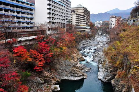 Sky, Water, Wilderness, City, Human settlement, Tree, Daytime, River, Urban area, Leaf,