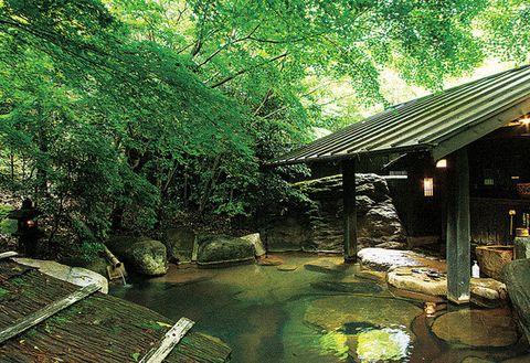 Nature, Vegetation, Green, Water, Nature reserve, Natural environment, Tree, Natural landscape, Jungle, Forest,