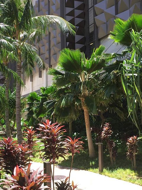 Vegetation, Plant, Tree, Palm tree, Botany, Arecales, Elaeis, Flowering plant, Terrestrial plant, Flower,