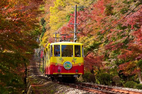 Land vehicle, Vehicle, Transport, Mode of transport, Rolling stock, Leaf, Tree, Autumn, Track, Tram,