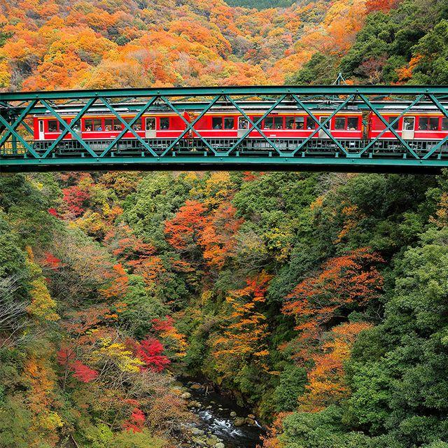 Leaf, Nature, Tree, Bridge, Vegetation, Autumn, Natural landscape, Transport, Biome, Plant,