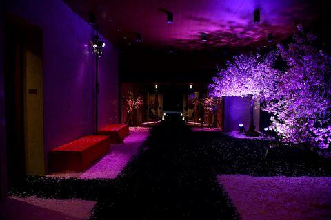 Purple, Violet, Lighting, Light, Pink, Magenta, Night, Tree, Architecture, Darkness,