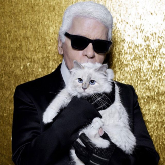 cat, small to medium sized cats, felidae, whiskers, suit, formal wear, tuxedo, eyewear, outerwear, fur,