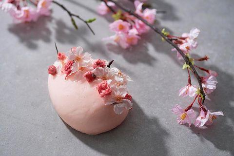 Branch, Petal, Flower, Twig, Pink, Blossom, Botany, Spring, Peach, Still life photography,