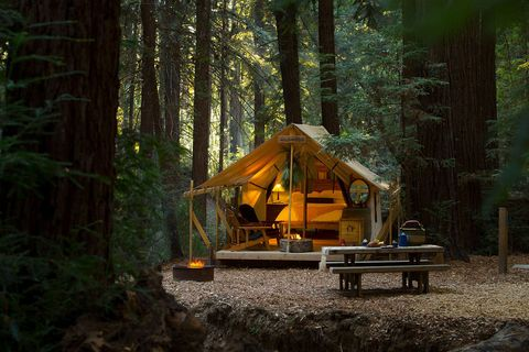 Natural landscape, Tree, Forest, Natural environment, Woodland, Wilderness, Biome, Old-growth forest, Log cabin, Temperate coniferous forest,
