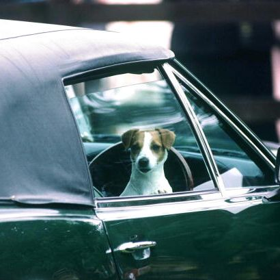 Motor vehicle, Vehicle, Car, Vehicle door, Canidae, Classic, Whippet, Classic car, Hardtop, Vintage car,