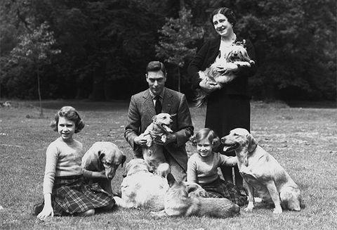 Human, Dog breed, Dog, Vertebrate, Carnivore, Mammal, Sporting Group, Companion dog, Vintage clothing, Canidae,
