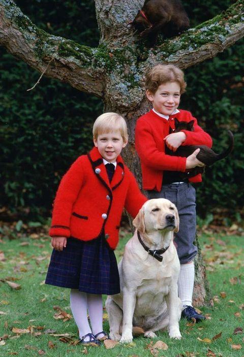Vertebrate, Dog, Mammal, Canidae, Dog breed, Sporting Group, Carnivore, Tree, Child, Autumn,