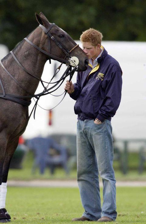 Horse, Bridle, Halter, Vertebrate, Rein, Mammal, Horse supplies, Horse tack, Animal sports, Mare,