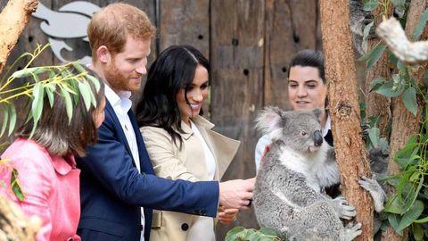 Koala, Fur, Marsupial, Wildlife, Adaptation, Plant,