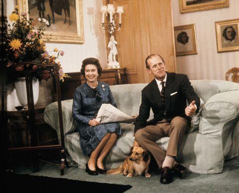 Human, Leg, Lighting, Dog breed, Comfort, Sitting, Living room, Dog, Picture frame, Interior design,