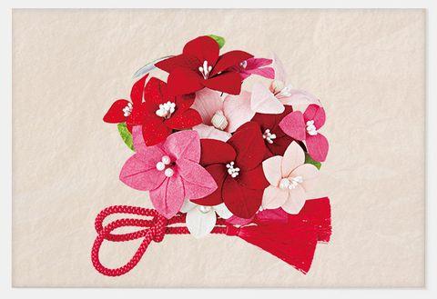 Pink, Flower, Red, Petal, Plant, Cut flowers, Botany, Bougainvillea, Magenta, Illustration,