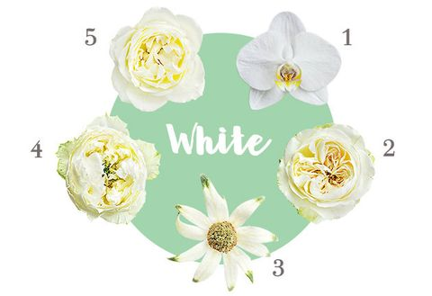 Flower, Yellow, Cut flowers, Petal, Plant, Artificial flower, Magnolia, Wildflower,
