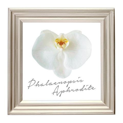 White, Picture frame, Yellow, Flower, Petal, Plant, Heart, Moth Orchid, Beige, Orchid,