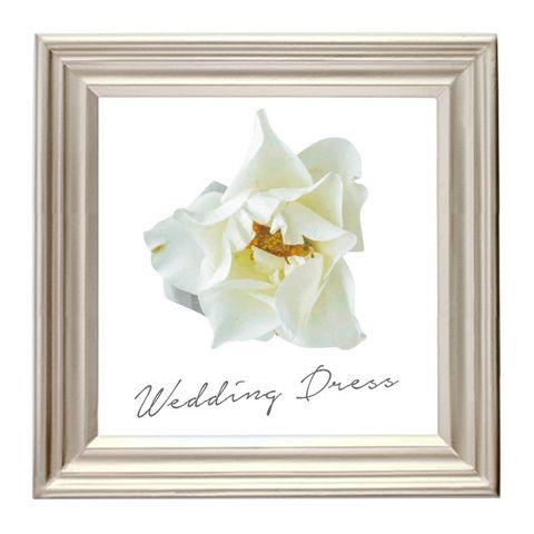 White, Picture frame, Yellow, Petal, Flower, Plant, Beige, Iris, Magnolia, Anniversary,