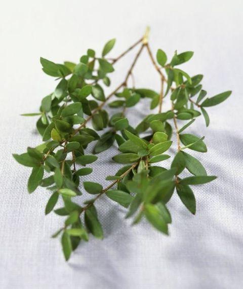 Leaf, Botany, Twig, Plant stem, Herb, Annual plant,