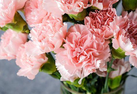 Flower, Flowering plant, Pink, Garden roses, Cut flowers, Petal, Plant, Bouquet, Rose, Carnation,