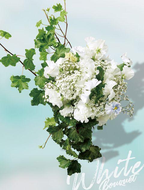Flower, Plant, Bouquet, White, Flower Arranging, Floral design, Floristry, Flowering plant, Cut flowers, Petal,