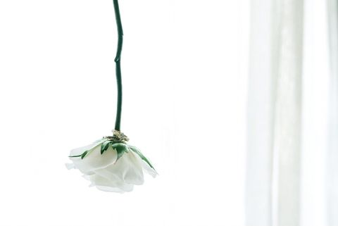 White, Leaf, Plant, Fashion accessory, Ornament, Flower,