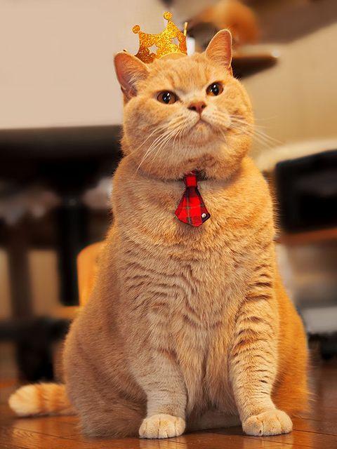 Whiskers, Vertebrate, Small to medium-sized cats, Felidae, Carnivore, Cat, Orange, Amber, Floor, Sitting,