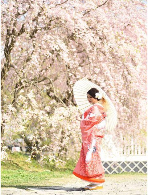 Cherry blossom, Blossom, Flower, Pink, Spring, Plant, Costume, Kimono, Peach,