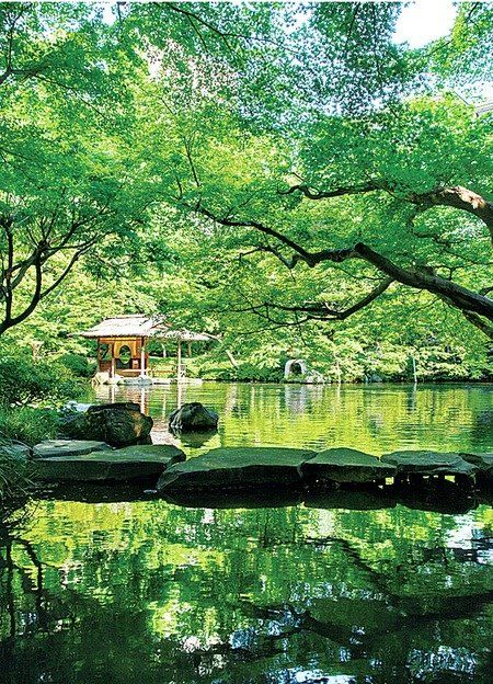Green, Nature, Tree, Natural landscape, Water, Reflection, Vegetation, Natural environment, Pond, Nature reserve,
