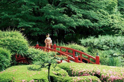 Botanical garden, Garden, Nature, Vegetation, Green, Botany, Bridge, Tree, Shrub, Plant,