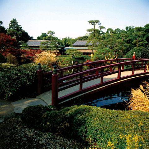 Nature, Bridge, Vegetation, Natural landscape, Botany, Tree, Sky, Landscape, Plant, Botanical garden,