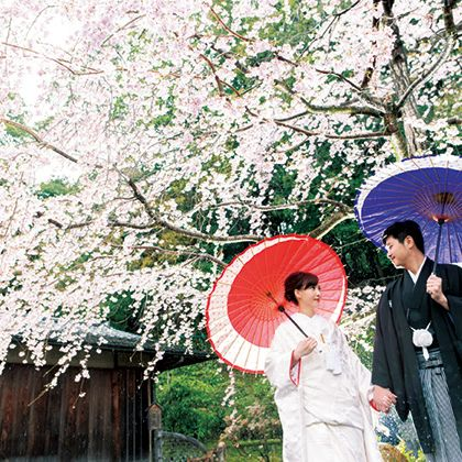 Umbrella, Photograph, Flower, Spring, Plant, Cherry blossom, Botany, Fashion accessory, Blossom, Tree,