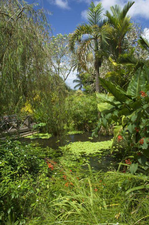Vegetation, Nature, Plant, Plant community, Garden, Shrub, Woody plant, Botany, Terrestrial plant, Grass family,