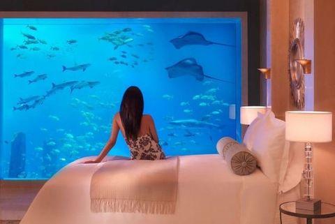 Room, Wallpaper, Aquarium, Leisure, Vacation, Interior design,