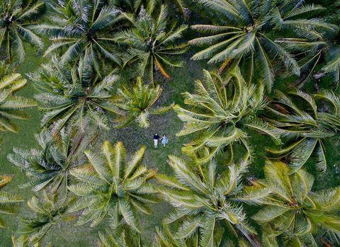 Leaf, Plant, Vegetation, Flower, Botany, Terrestrial plant, Flowering plant,