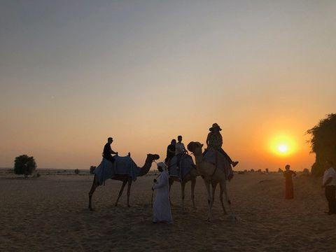 Camel, Arabian camel, Natural environment, Rein, Landscape, Ecoregion, Camelid, Desert, Sand, Sky,