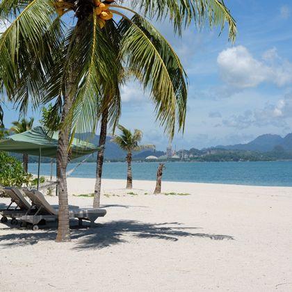 Beach, Tropics, Tree, Palm tree, Vacation, Caribbean, Arecales, Shore, Sea, Ocean,