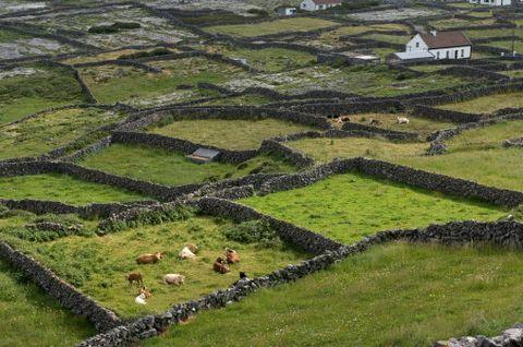 Natural landscape, Terrace, Landscape, Highland, Rural area, Land lot, Grass, Grassland, Fell, Plantation,
