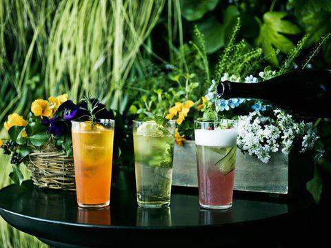 Liquid, Fluid, Drink, Flower, Tableware, Alcoholic beverage, Classic cocktail, Highball glass, Juice, Ingredient,