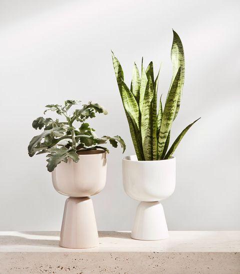 Flowerpot, White, Houseplant, Green, Plant, Flower, Botany, Leaf, Aloe, Grass,