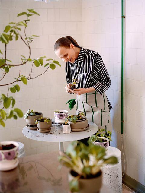 Houseplant, Room, Flower, Flowerpot, Plant,